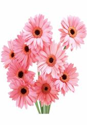 Citystore.in, Flower Bunch, Pink Gerbera  Flower Bunch, City Store,